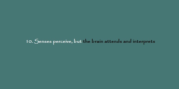 susan-weinschenk-the-top-10-things-you-need-to-know-about-perception-brain