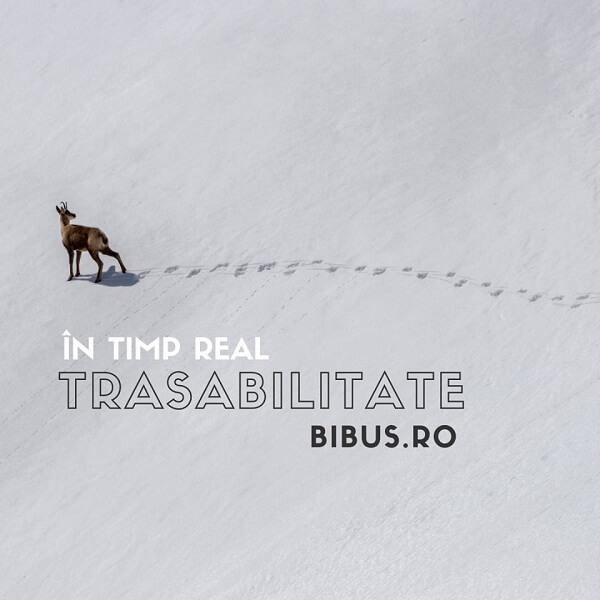 În timp real @ BIBUS