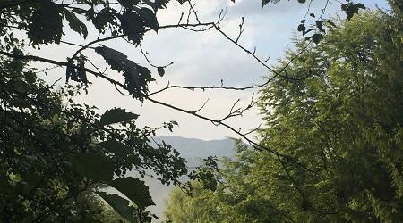 Campul lui Neag