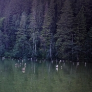 Lacul Rosu, Harghita