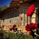 2 Voronet vedere dintre trandafiri