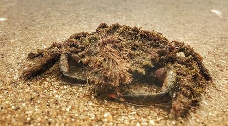 Brand Experience Ultramarin Timisoara Crabul
