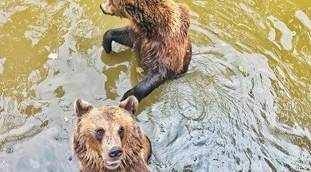 Pull Marketing Digital Strategy B2B Strategy TIMISOARA the Brown Bear